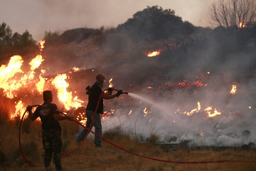 Locals try to extinguish a forest fire in Palini suburb in Athens