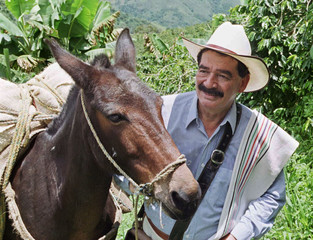 """COLOMBIA'S COFFEE ICON JUAN VALDEZ AND HIS MULE """"LANA"""" POSE WITH COFFEE PLANTS IN THE BACKGROUND."""