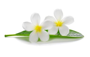 Tuinposter Frangipani Tropical flowers frangipani (plumeria) isolated on white background