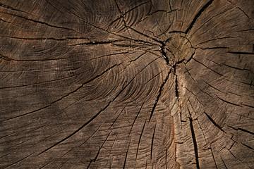 bois matière tronc arbre coupe fissure forêt texture