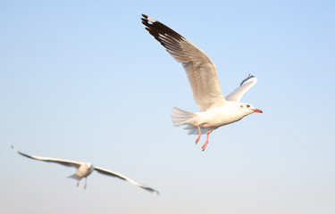 A seagull flying in the sky.