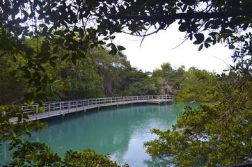 Laguna de las Ninfas, a saltwater lagoon in the town of Puerto Ayora, on Santa Cruz island in the Galapagos Islands.