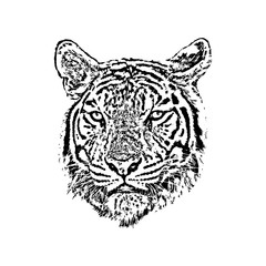 Vector of a tiger face on white background. Wild Animals.