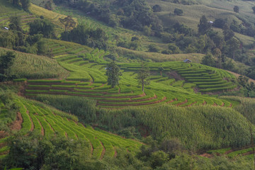 Terraced Rice Field with Hut and Mountain Background , Chiang Mai in Thailand ,Blur Background