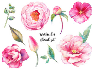 Hand painted floral elements set. Watercolor botanical illustration of tulip, peony, rose flowers and leaves. Natural objects isolated on white background