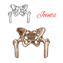 Vector sketch icon of human pelvis bones or joints