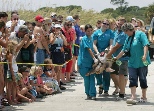 A loggerhead sea turtle named Golden Boy is carried to the water by staff members of the Georgia Sea Turtle Center past a crowd on Jekyll Island