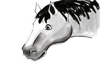 Sketch of horse is fantastic ilustration created with brush on the paper.