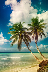 Fototapete - Beach with coconut palm,  uninhabited tropical island
