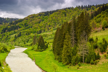 River among the forest in picturesque Carpathian mountains in summer