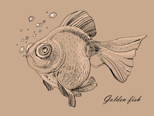 Golden fish, hand painted drawing of outline isolated on white background