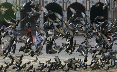 Pigeons fly inside the Jama Masjid (Grand Mosque) complex in the old quarters of Delhi