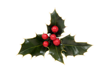 isolated holly with red berries