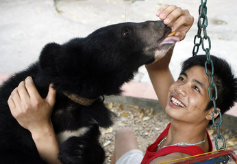 Veterinarian Nguyen Viet Hai plays with a moon bear at a zoo in Hanoi