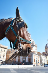 Head of horse against square in Rome