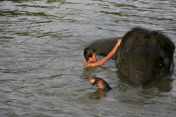 A young mahout swims with elephant in Ayutthaya