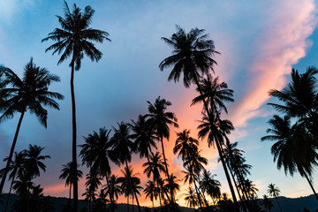 Spectacular sunset over palm trees