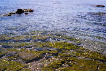 Coral verde, agua clara