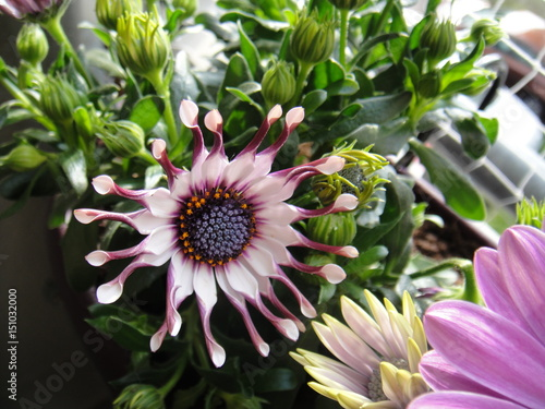blume balkon pink weiss lila natur blühen frühling pflanze green rot ...