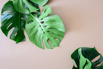 Monstera leaves tropical background with a space for a text