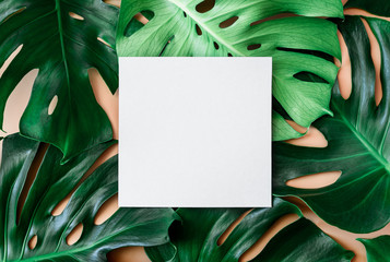 Monstera leaves background with a space for a text