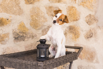 cute young dog portrait with his paw on a candle. Stone background. . Love for animals concept. Pets outdoors