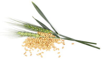 green ears of wheat and grains isolated on white background, top, view,