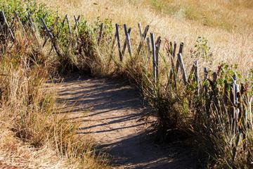 Boardwalk for Nature Trail in Savannah Field