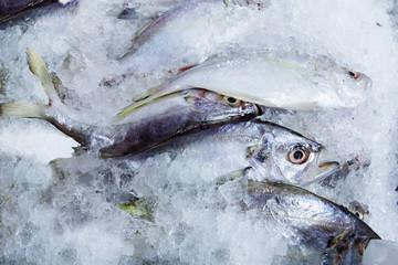 The flesh mackerel in fish market