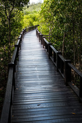 Boardwalk, The Nature Trail in Mangrove Forest