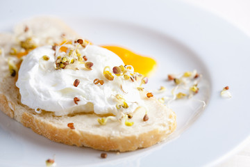 Benedict egg on white bread with sprouts on a white plate