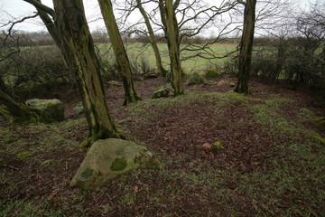 Remains of megalithic tomb Neu Negentin in Mecklenburg-Vorpommern, Germany