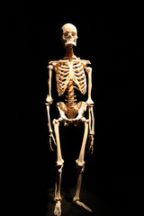 Human skeleton anatomical death abstract isloated