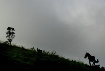 """A wild horse runs during the """"Rapa Das Bestas"""" event in Sabucedo, Spain."""