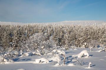 Winter landscape in Lapland, Finland.