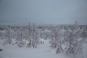 Sunrise near Inari, Finland. (Lapland).