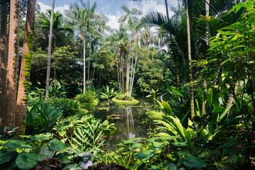 Small pond in the Singapore Botanic Gardens
