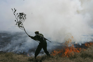 A park warden uses a branch as he tries to extinguish a fire at Lake Nakuru National Park in the Rift Valley in Nakuru
