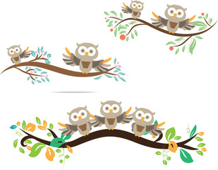 owl cute in isolate background