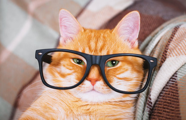 Cute red cat with glasses close-up.