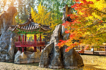 Wall Mural - Autumn in Nami island, Korea.