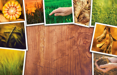 Agriculture themed collage photos with copy space