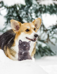 Dog And a kitten on a winter walk