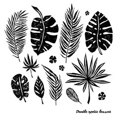 Set of black doodle exotic leaves on a white background. Vector botanical illustration, elements for design.