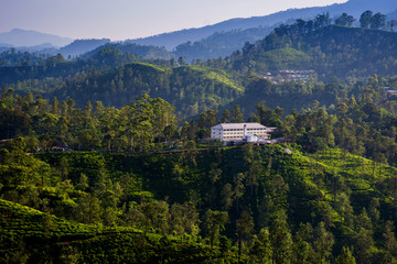 A tea factory surrounded by tea plantations in Ella, Sri Lanka