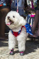 """Fluffy white dog celebrating carnival dressed up in a superhero costume at the annual """"bloacao"""" street party for animals in Rio de Janeiro, Brazil"""