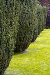 A row of neat garden trees