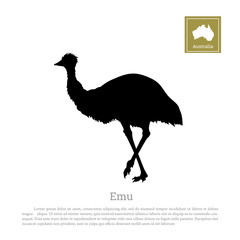 Black silhouette of ostrich emu on white background. Animal of Australia