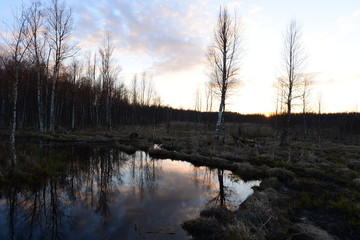 Sun at sunset over a forest swamp in the spring
