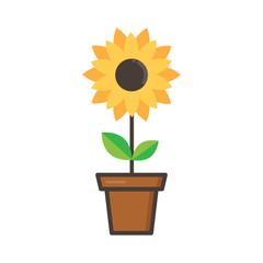 cartoon cute sunflower in a flowerpot on a white background